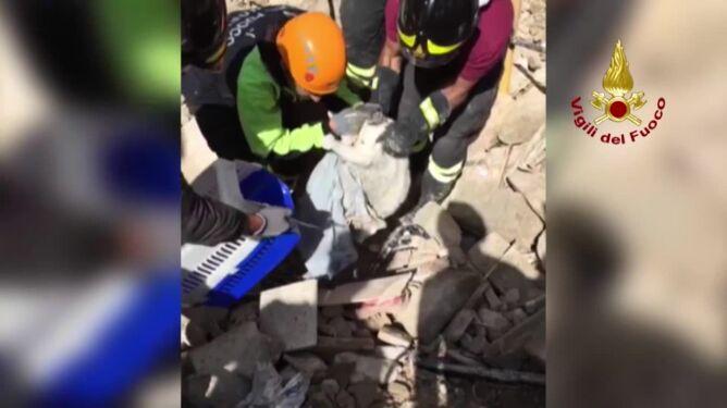 Kolejny kot przeżył trzęsienie ziemi we Włoszech. Spędził pod gruzami 16 dni